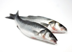 Bass, dicentrarchus labrax, Fresh Fishes against White Background