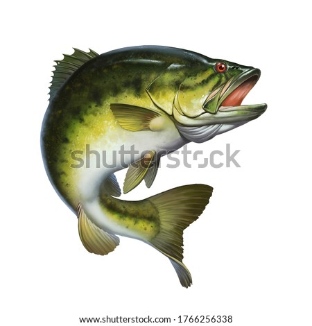 bass fish jumps out of water isolate realistic illustration. Big Largemouth Bass. perch fishing in the usa on a river or lake at the weekend. stock photo