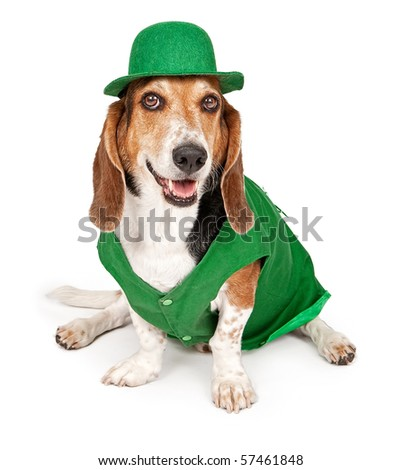 Basset Hound dog wearing green St. Patrick's Day outfit. Isolated on white