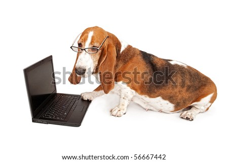 Basset Hound dog with glasses on looking at a laptop computer with one paw on the keyboard