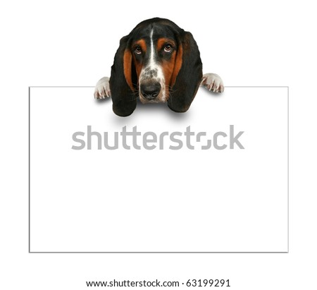 basset hound with sign