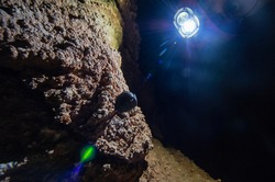 Bat found hanging upside down froma a cave ceiling