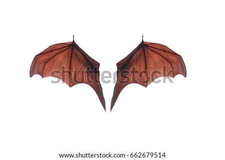 Bat wing isolated on white background