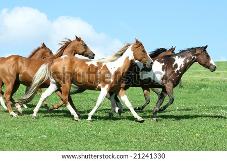 Batch of nice horses