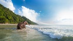Bathing elephant on the tropical beach background. Havelock island, India.