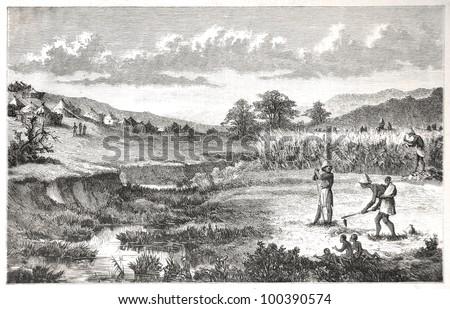 Batlapine people at farming work, drawn by J. Vanione in Emil Holub's