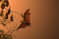 Bats are flying at sunset.