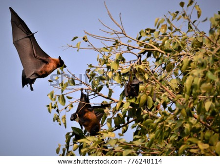 bats are mammals of the order...