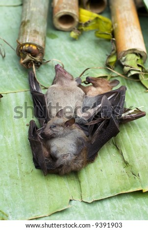 Bats at the Market in Luang Prabang, Laos