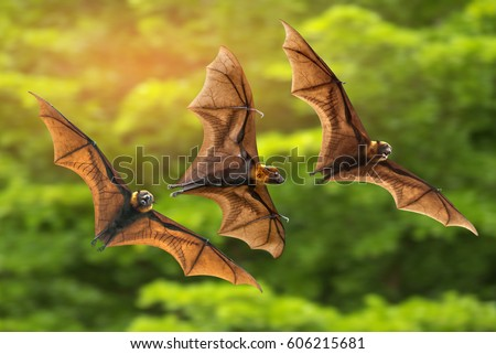 Bats flying on green background