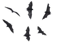 Bats, Fruit Bats Isolated on White Background