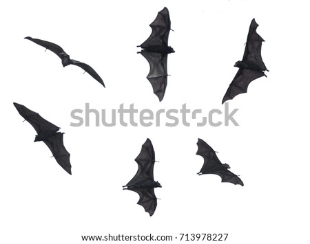 Bats, Fruit Bats Isolated on White Background