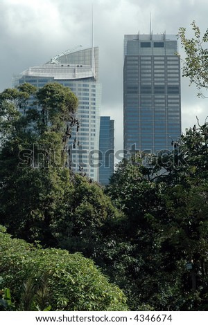bats hanging on trees in Royal Botanic Gardens in Sydney, contrast between nature and modern architecture