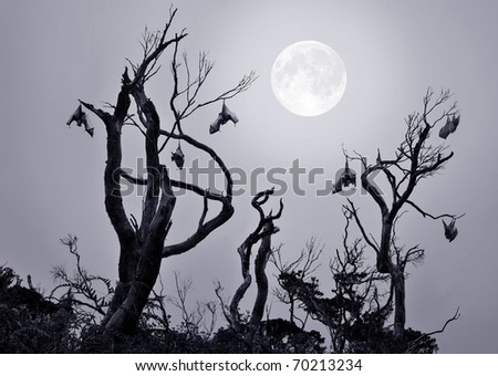 Bats in gnarled trees with full moon background in a scary and spooky scene as Halloween theme.