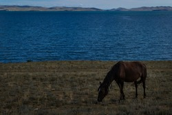 bay brown horse graze on grass coast, against the background of blue lake baikal, mountains and clouds