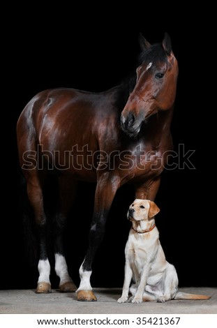 bay horse and dog on the black background