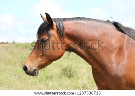 Bay horse in field #1237538713