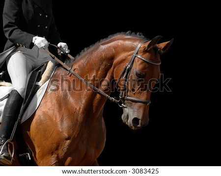bay horse isolated on black - stock photo