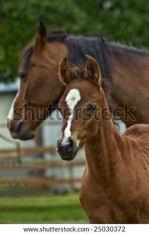 Bay horse mare and her baby foal.
