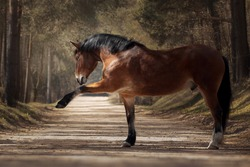 Bay horse playing on the road