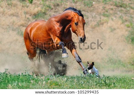 Bay horse playing with dog