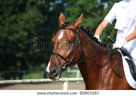 Bay horse portrait during horse competition - stock photo