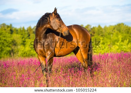 Bay horse portrait in pink flowers in summer