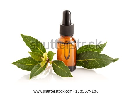 Bay laurel essential oil isolated on white background. Bay oil on glass bottle with dropper. Laurus nobilis