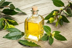 Bay laurel essential oil on wooden background. Bay oil on glass bottle . Laurus nobilis