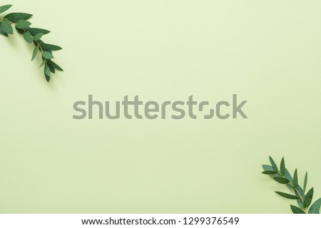 Bay leaf branches. Minimal plant decor. Copy space on light olive background. #1299376549