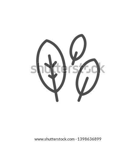 Bay leaf line icon isolated on white