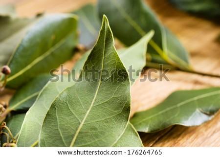 Bay leaf macro. Organic food
