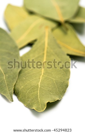 bay leaves closeup on white background