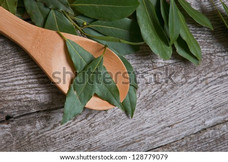 Bay leaves spice on a wooden spoon