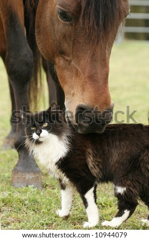 Bay Stallion scratching the back of a cat