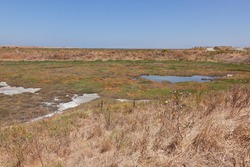 Baylands Preserve is the largest tract of undisturbed marshland remaining in the San Francisco Bay.