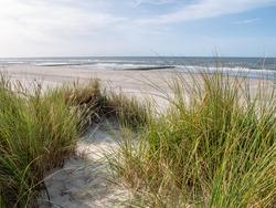 Beach and European marram grass or beachgrass, Ammophila arenaria, at North Sea coast of Vlieland, West Frisian island, Netherlands