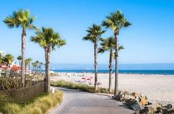 Beach and Palm Trees in San Diego, Southern California Coast, USA