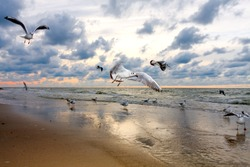 Beach and seagulls in sunset