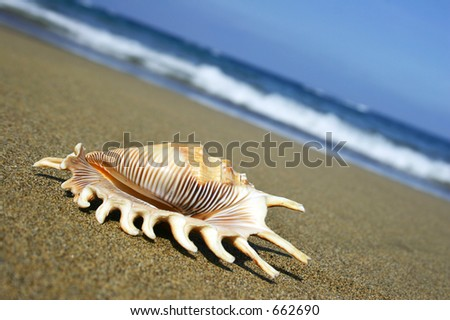 Beach and Seashell
