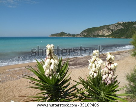 Beach and yucca plant on the island of Corfu, Greece