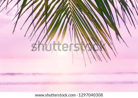 Beach background with palm tree. Tropical beach palm leafs. Pink sunset in tropic. Blurred photo with soft focus.