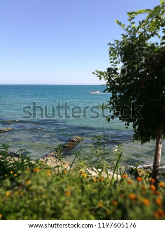 beach beauty in Nature Clear sky environment Freedom horizon over water Land outdoors Plant pollution scenics sea #1197605176