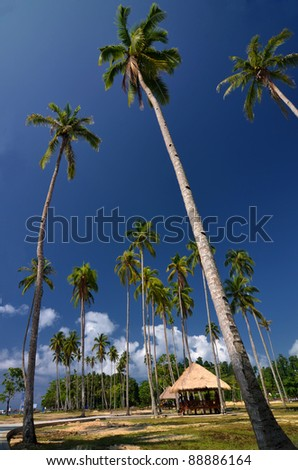 Beach, cocconut tree and cottages on a sunny day with beautiful blue sky. This picture taken in public beah of waisai, Raja Ampat Island, papua , Indonesia