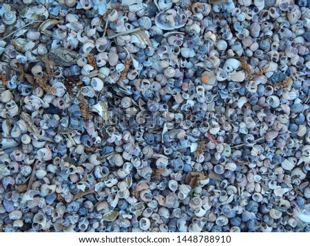 Beach covered with shells, close-up, texture #1448788910