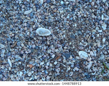 Beach covered with shells, close-up, texture #1448788913