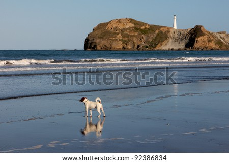 Beach Dog and light - stock photo