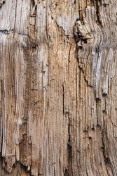 Beach drift wood log texture.