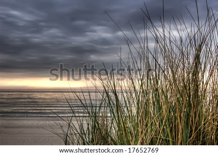 beach grass at sunset, calm before the storm