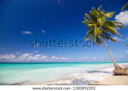 Beach in Alagoas - Brazil